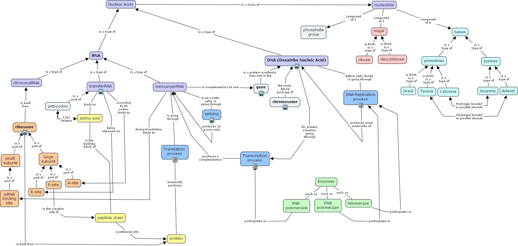 Concept Map Nucleic Acids.Ihmc Cmaptools Concept Map Dna Cmap