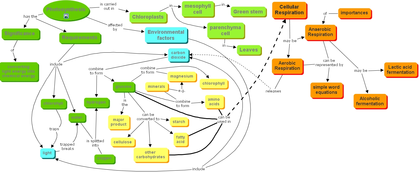 Term papers writersprofessional writing services aerobioc photosynthesis and cellular respiration quiz proprofs quiz easy method for making a photosynthesis concept map with ccuart Images