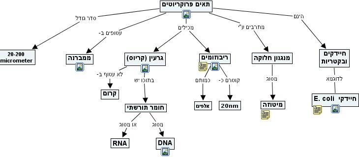 Ihmc Cmaptools Concept Map Prokaryotic Cells