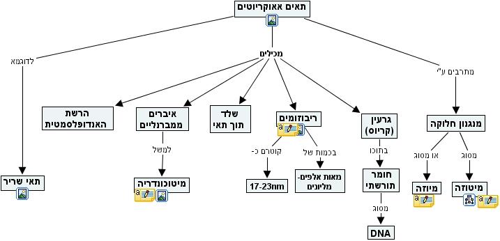 Ihmc Cmaptools Concept Map Eukaryotic Cells