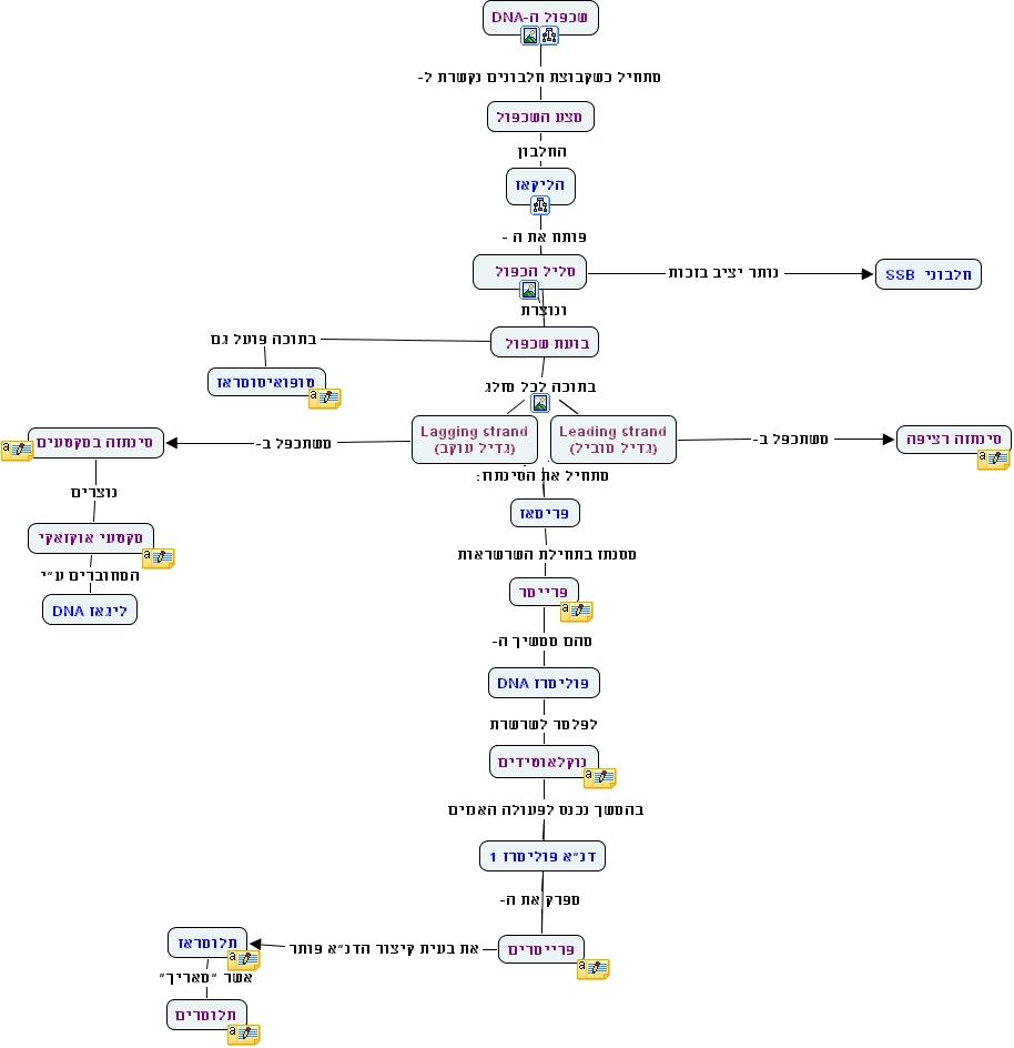 IHMC CmapTools   Concept Map :: replecation dna