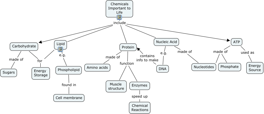 Nucleic Acid Concept Map Concept Map Nucleic Acids
