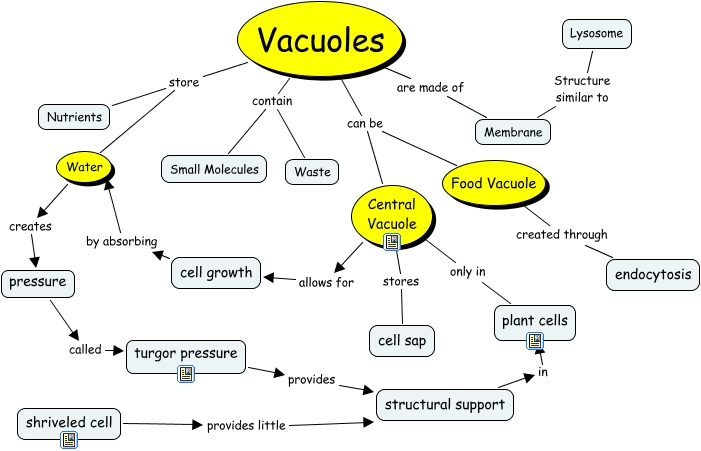 Vacuole Blue - What is...
