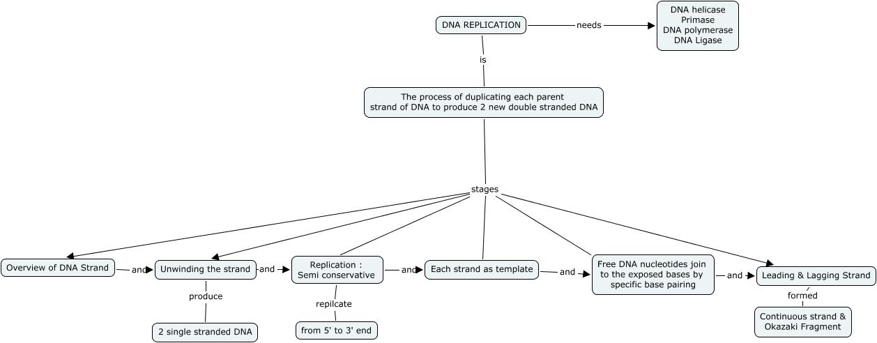 concept map DNA replication