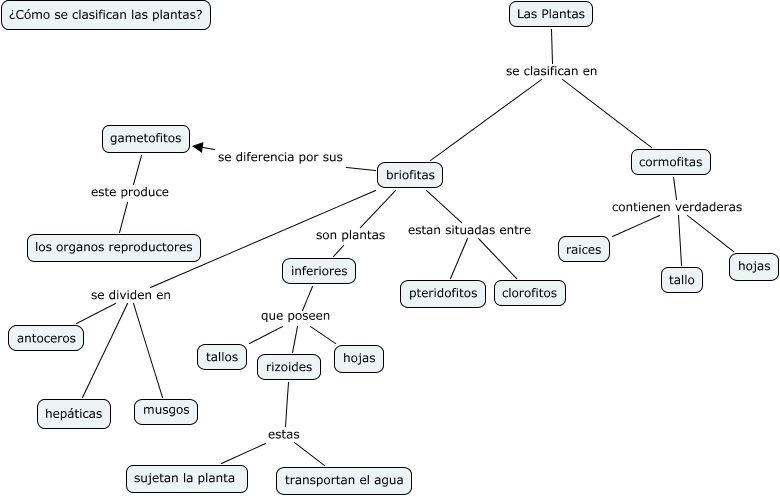 clasificaci n de las plantas c mo se clasifican las On como se clasifican las plantas ornamentales