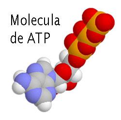 /Molecular polarity definition / concepts in molecular ...