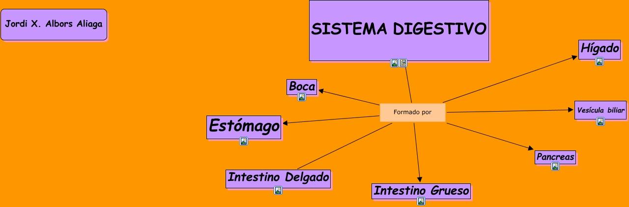 Sistema Digestivo - Partes del sistema digestivo humano