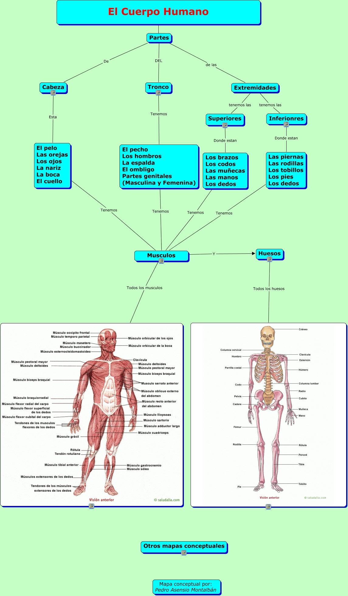 El cuerpo humano - Partes del cuerpo