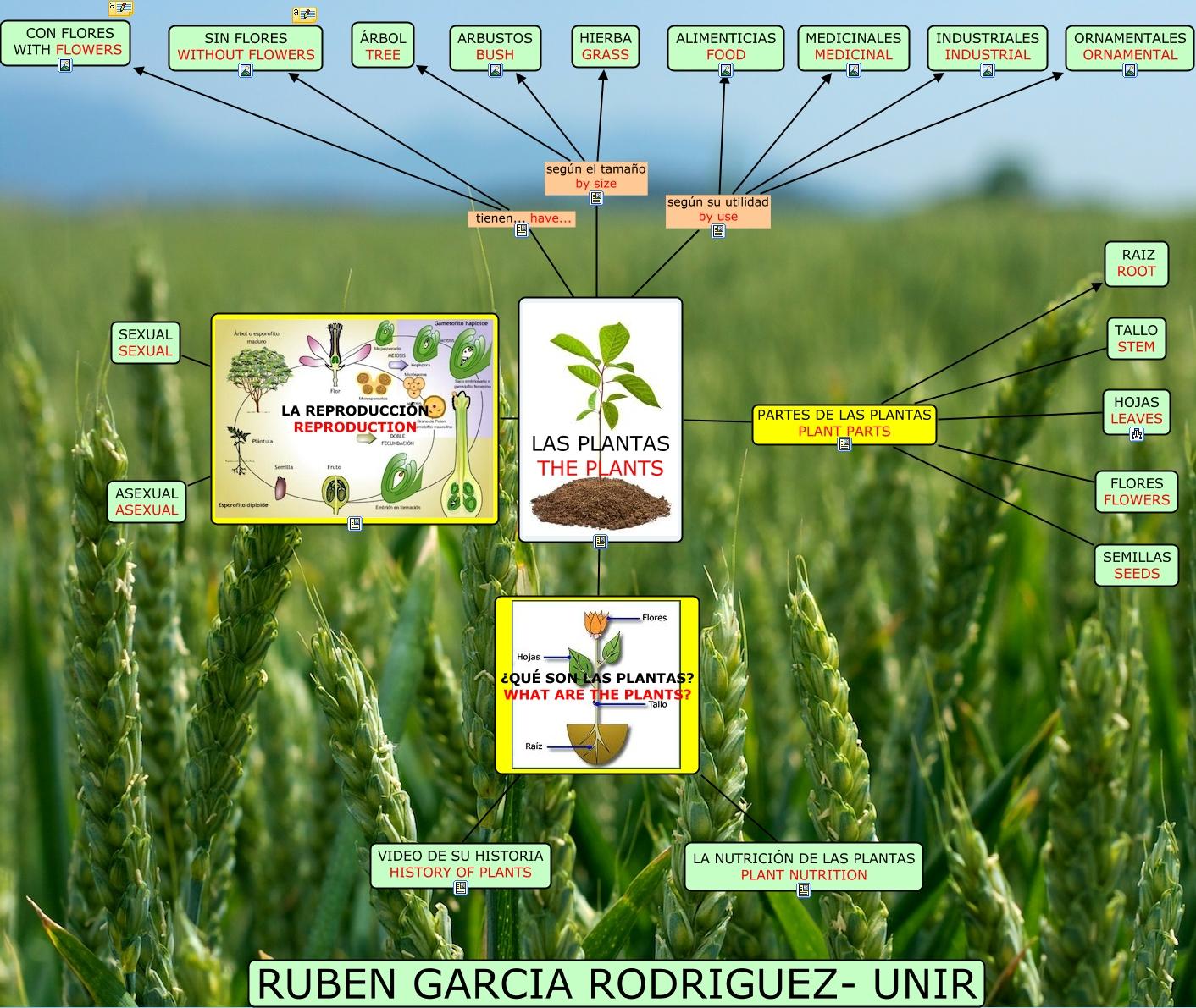 Las plantas ruben for Caracteristicas de las plantas ornamentales