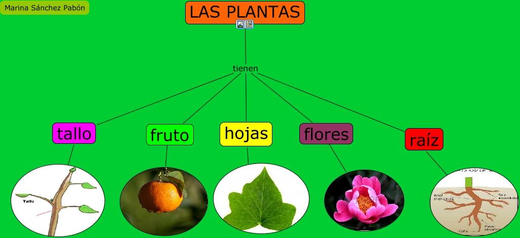 Las plantas - Todo sobre las plantas ...