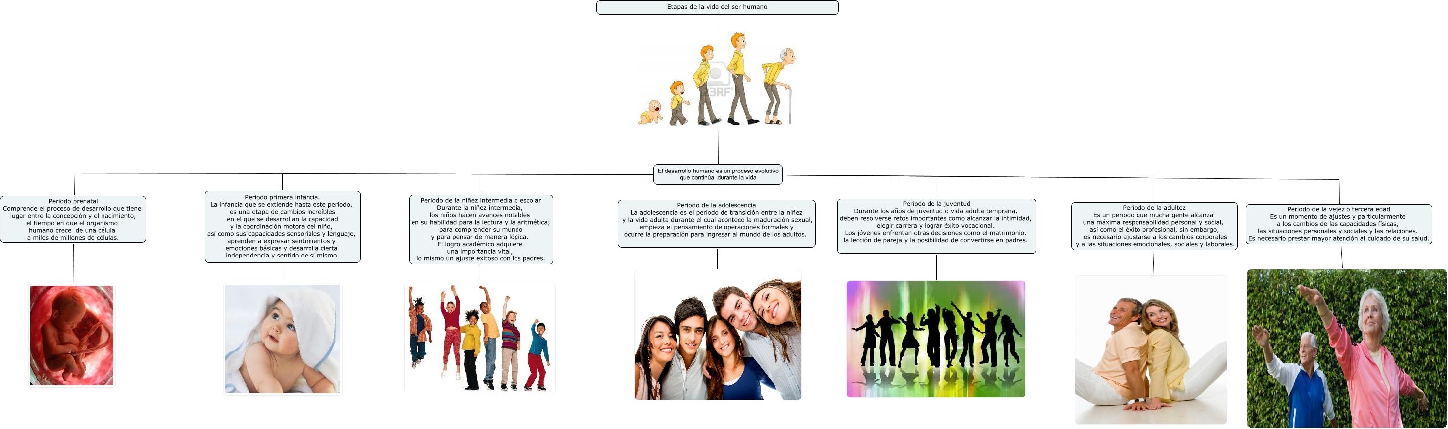 ebb6ac367 etapas del desarrollo humano