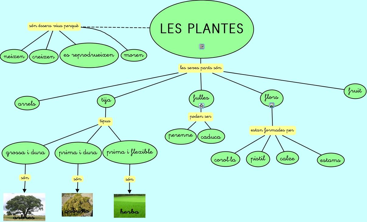 Les plantes presentaci for Les plantes