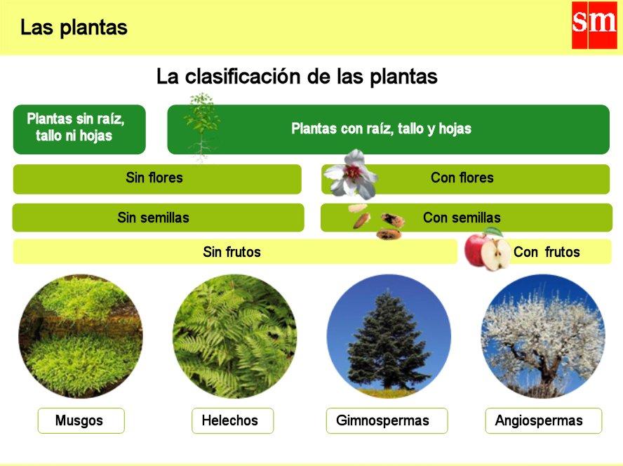 Ihmc public cmaps 2 for Clasificacion de las plantas ornamentales