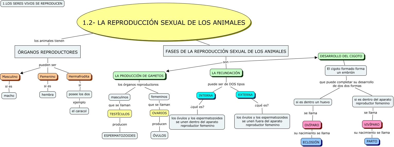 La reproduccion sexual de los animales - Como se aparean los elefantes ...