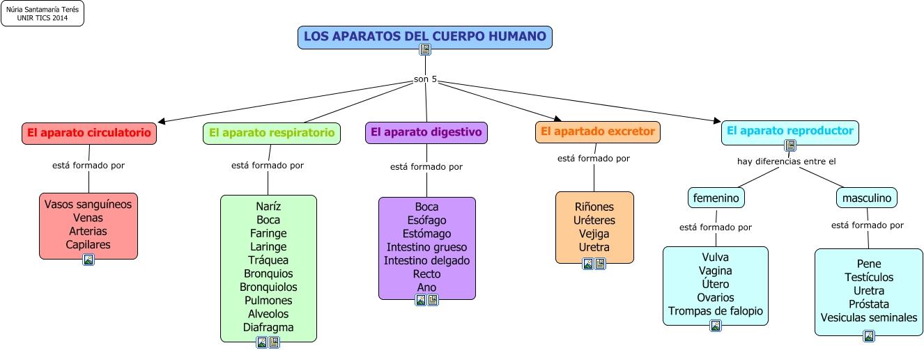aparatos del cuerpo humano