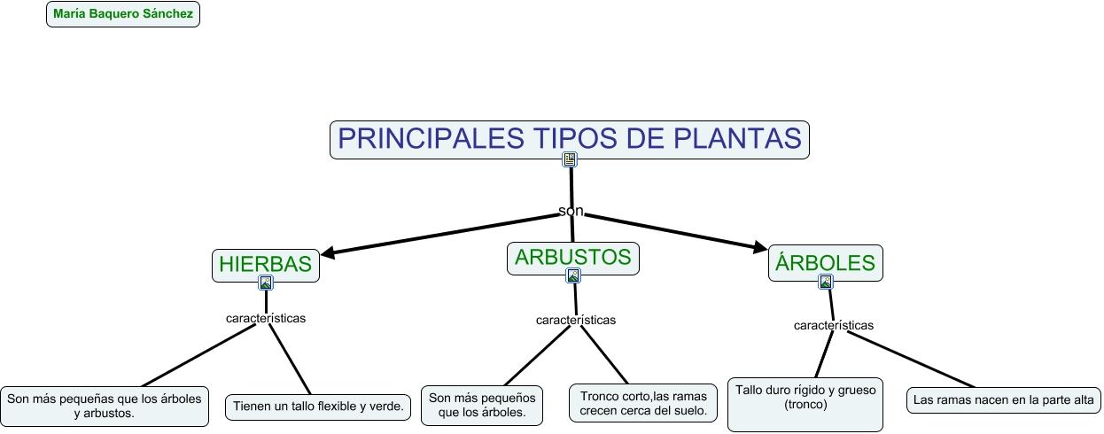 Tipos principales de planta for Las caracteristicas de los arboles