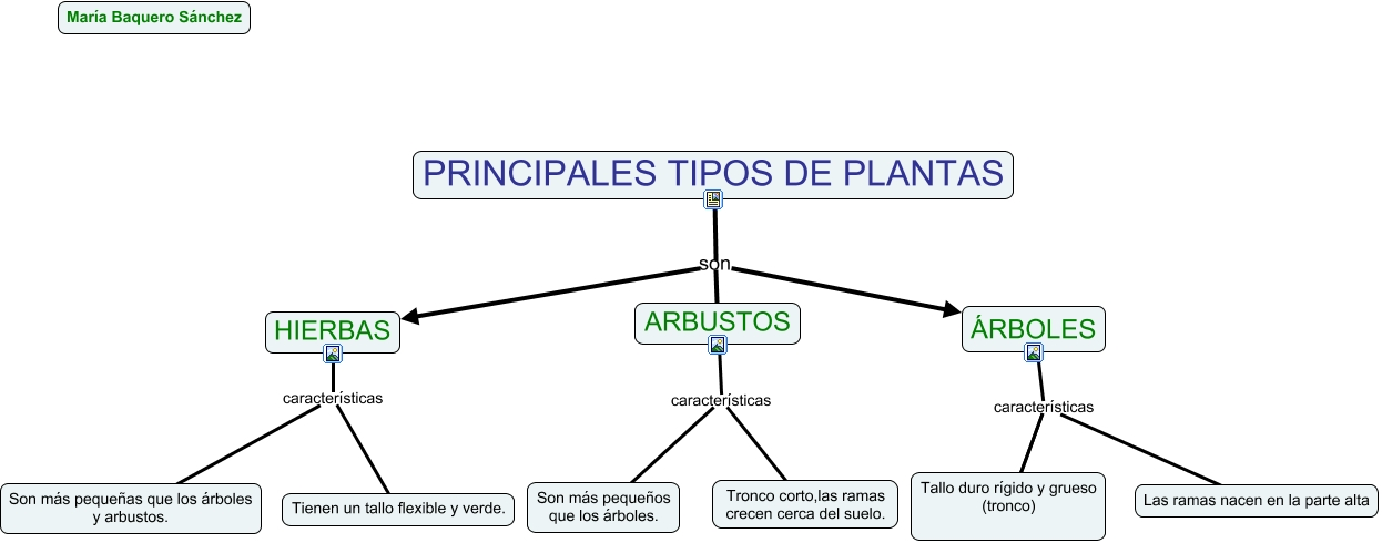 Tipos principales de planta for Tipos de arboles y caracteristicas