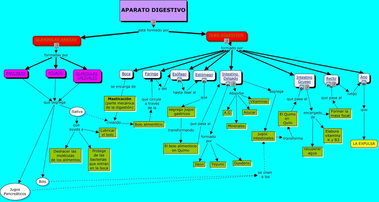MAPA CONCEPTUAL DE APARATO DIGESTIVO