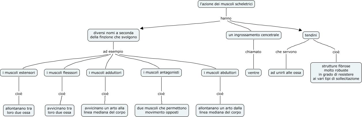 Lazione Dei Muscoli Scheletrici