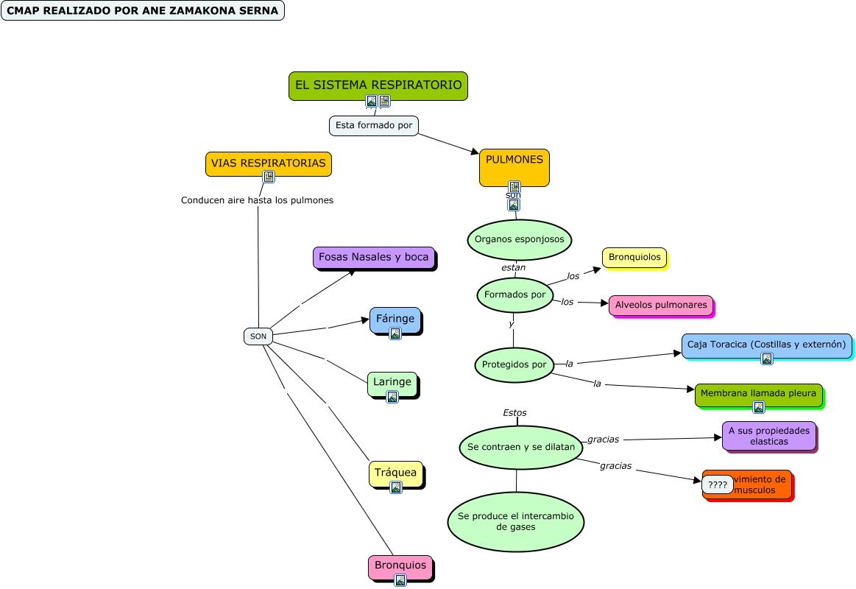 Mapa Conceptual El Sistema Respiratorio